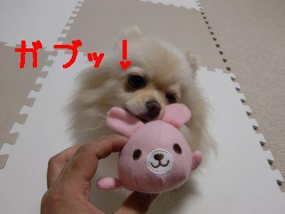 CIMG4365_20111206235129.jpg