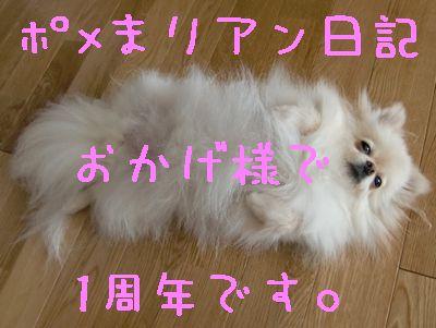 CIMG4373.jpg