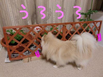 CIMG4519_20111109220710.jpg
