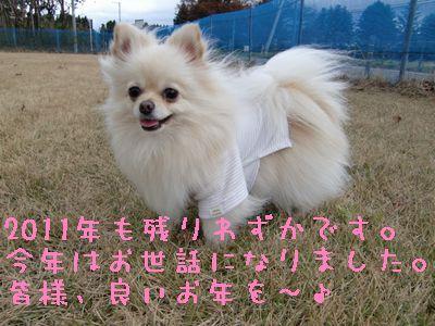 CIMG4565_20111231184432.jpg