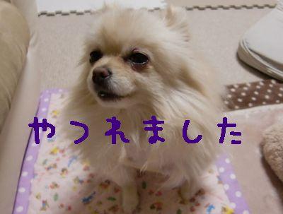 CIMG4601.jpg