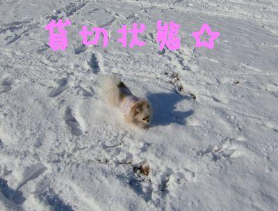 CIMG4610.jpg