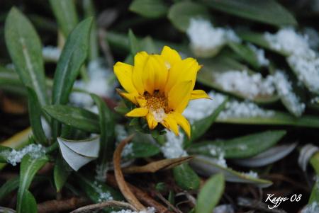 06DSC_0596-1雪