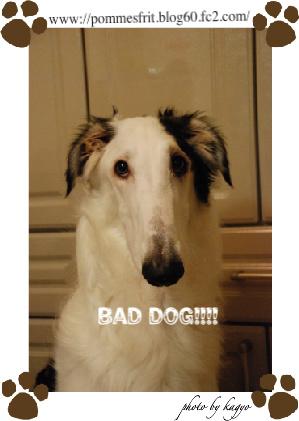 DSC_0666-1bad dog!!01