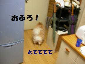 ブログ 028new