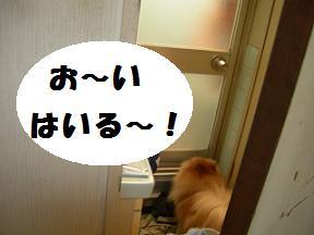 ブログ 029new