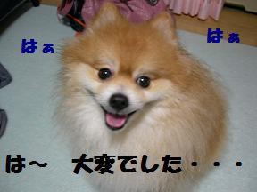 ブログ 033new
