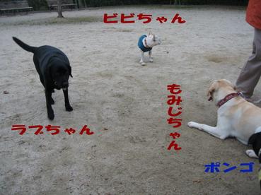 004_20090426195407.jpg