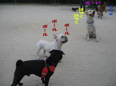009_20090604230806.jpg