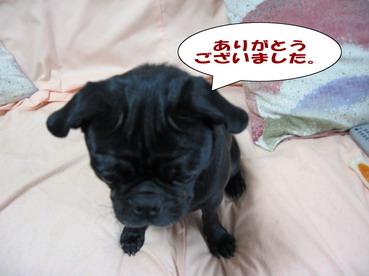 035_20081018203506.jpg