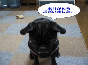 053_20081114220329.jpg