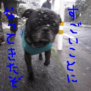 雪道2IMG_3889
