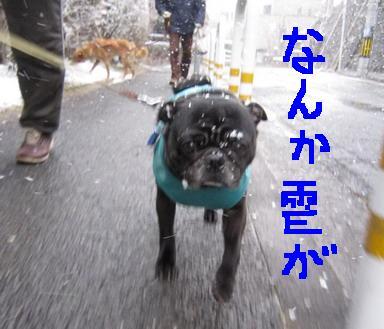 雪道IMG_3888