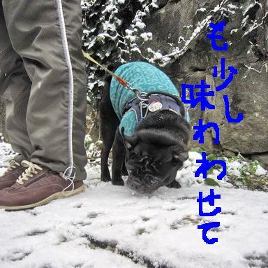 雪喰いIMG_3884