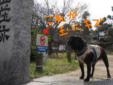 7タマニキズIMG_3942