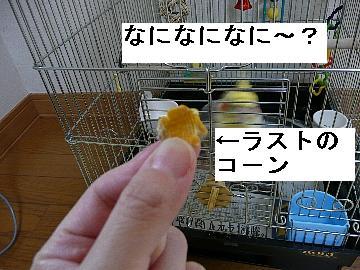 シ-ド10