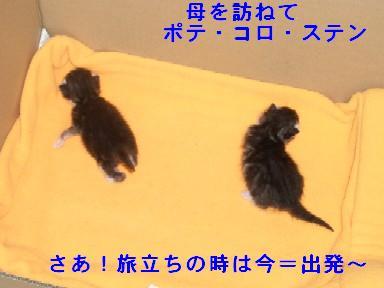 ねこ10月31日(火) 036