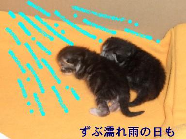 ねこ10月31日(火) 033
