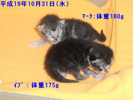 ねこ10月31日(火) 043