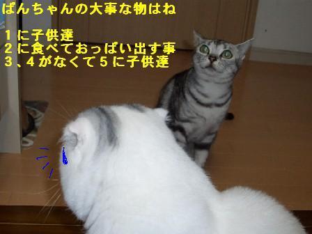 ねこ10月31日(火) 022