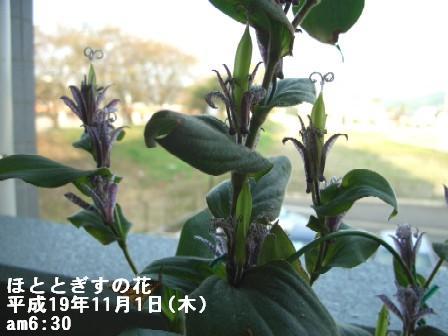 ねこ11月1日(木) 022