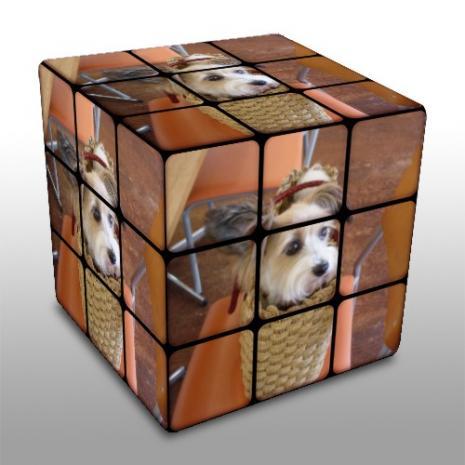 ルービックキューブ・カゴ犬