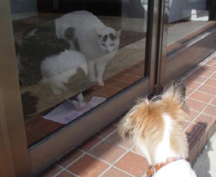 ガラス越しのネコたち