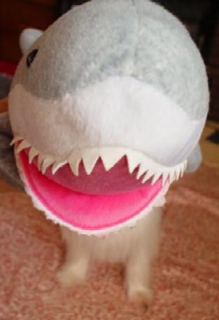 サメと合体