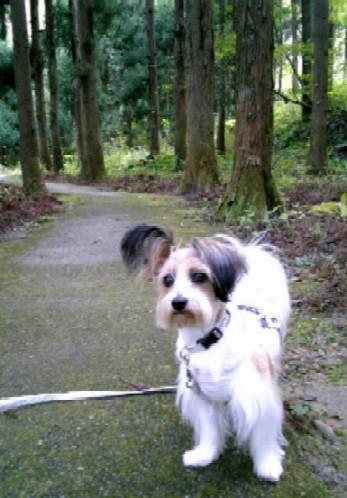 森の飼い犬