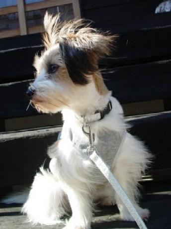 風に向かってすわる犬