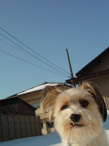 ゴキゲンな犬