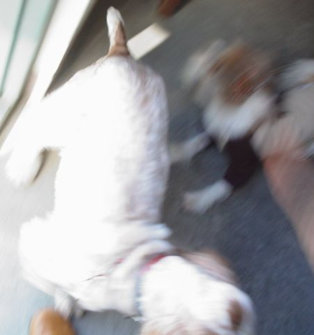 大喜びの犬たち