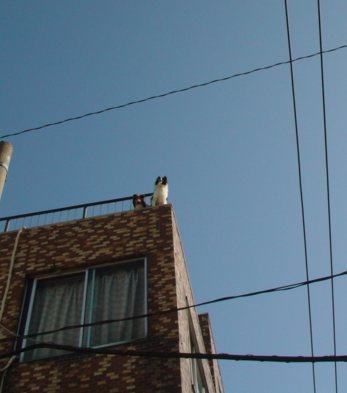 屋上の2匹
