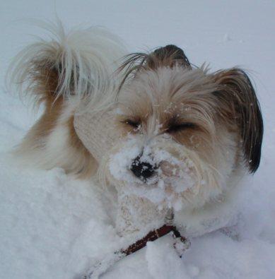 目をつぶる犬