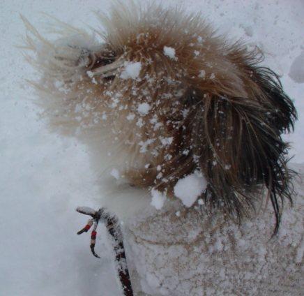 雪にとびかかる