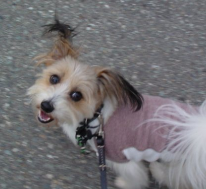 ニコニコ犬