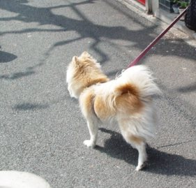 京都の犬②