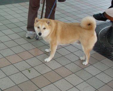 京都の犬⑤