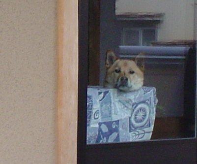 ガラス越しの犬