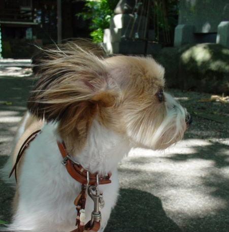 風を感じる