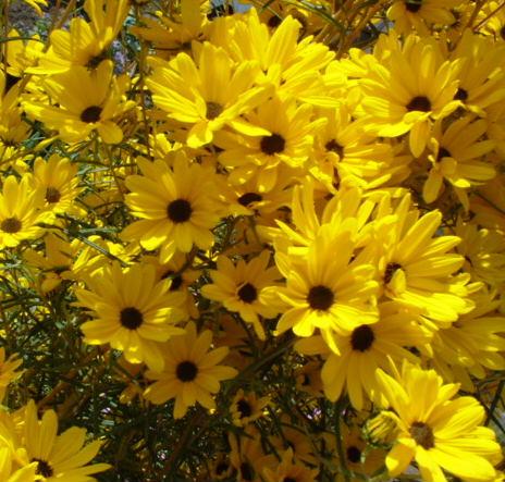 咲きまくる花