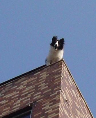 ビル4階屋上に住む犬