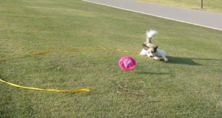 フリスビー犬1