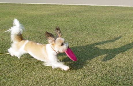 フリスビー犬2