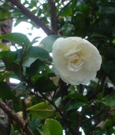 咲き始めの花