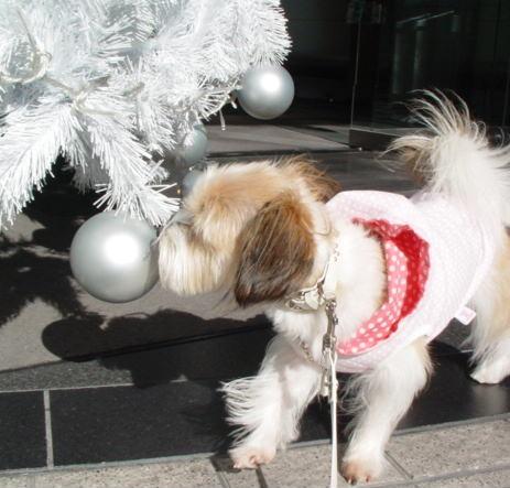 白いクリスマスツリーに