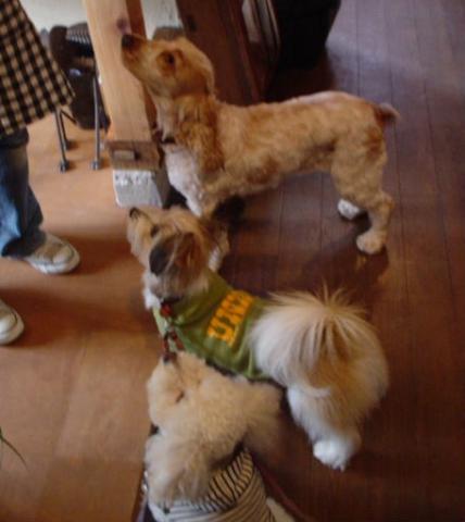 一列に並ぶ犬