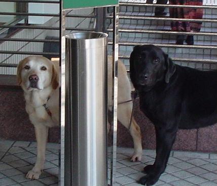 待つ犬たち