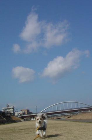 青空と白い雲とリプリー