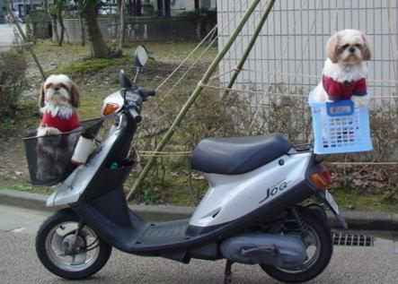 バイクに乗る犬たち